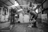 Shearing (Black & White) : Shearers